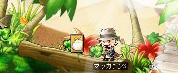 Maple7801a.jpg