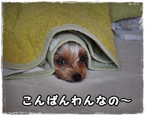 1_20120128000536.jpg