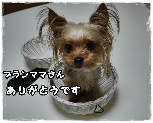 5_20120229224011.jpg