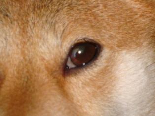 この瞳にはカメラを持つ母が映ってます^m^