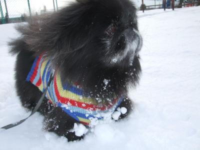 12月1日雪
