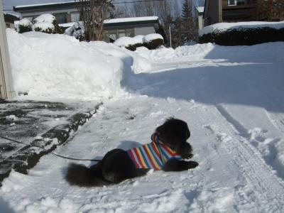 雪掻きの間の俺様