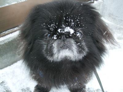 雪の散歩後
