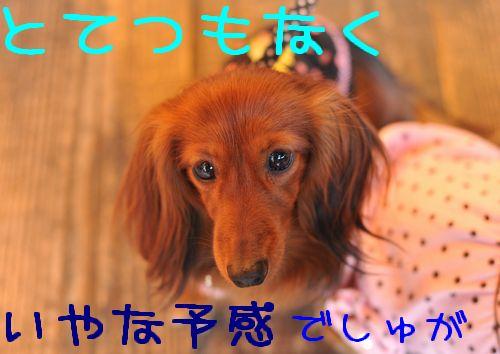 20100117_31.jpg
