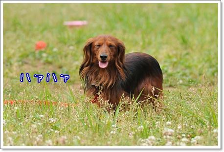 20100607kouen_5.jpg