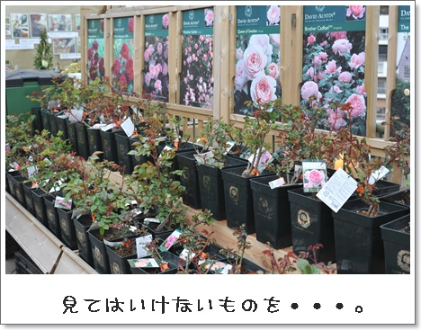 20103Mnikotama_4.jpg