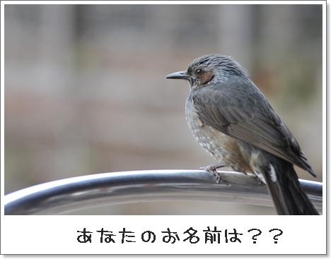 20103Mnikotama_8.jpg
