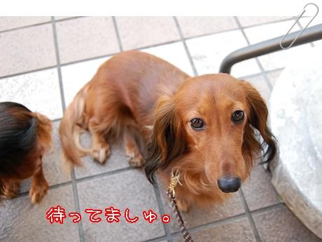 2010516cafe_13.jpg