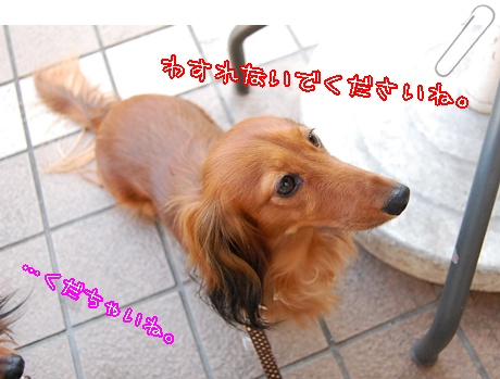 2010516cafe_14.jpg