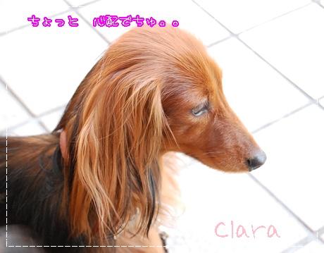2010516cafe_16a.jpg