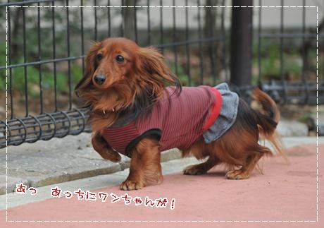 2010komazawa_11.jpg
