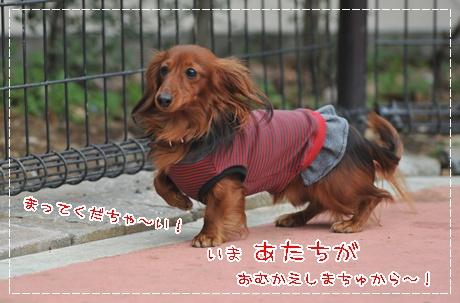 2010komazawa_12.jpg