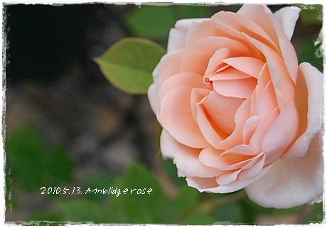 ambridge_17.jpg