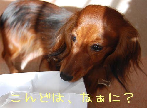 aroma_1.jpg