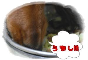 cabbage_6.jpg