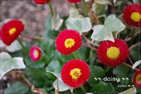 daisy_4b.jpg