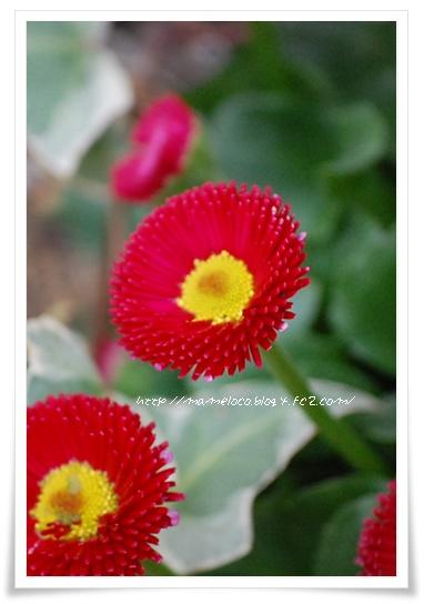 daisy_5.jpg