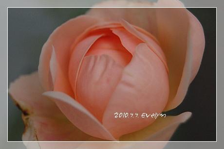 evelyn_15.jpg