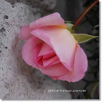 francois24_20100524155607.jpg