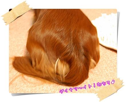 gum20104M_3.jpg
