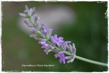 herbs_2.jpg