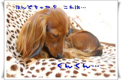 hyakukin_1.jpg
