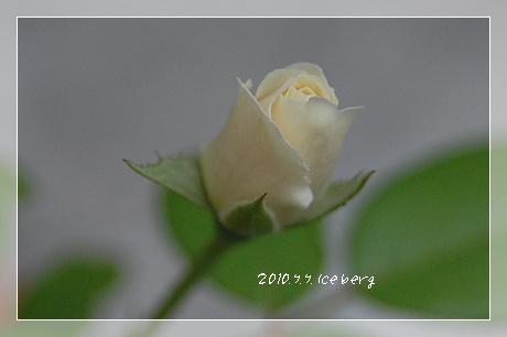 iceburg43.jpg