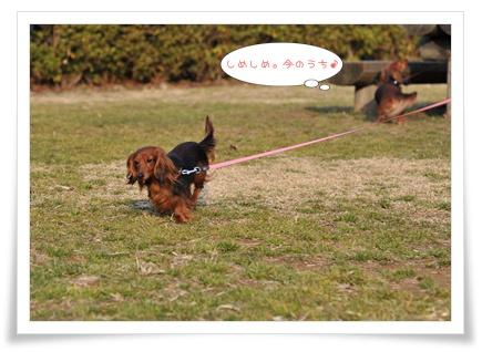 kawasaki_15.jpg