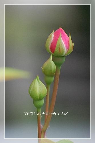 mothersday14.jpg