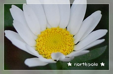 northpole3.jpg