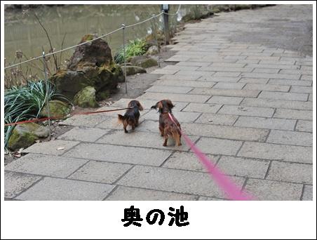okunoike_2.jpg