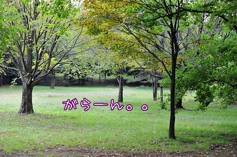 ryokuchi201010M_1.jpg