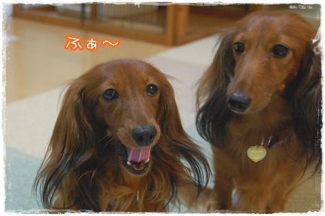 shako_3.jpg