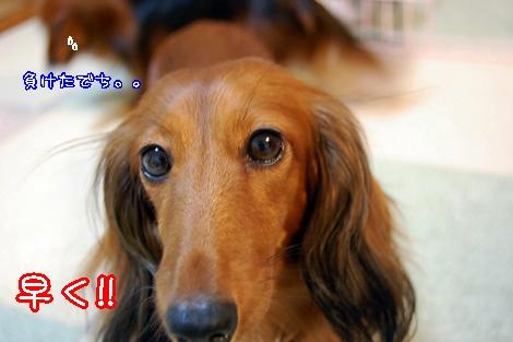 shako_5.jpg