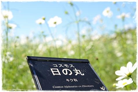 shouwa201010M_3b.jpg