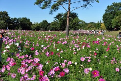 shouwa201010M_44.jpg
