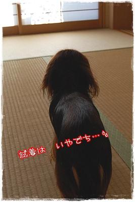 tatami_6.jpg