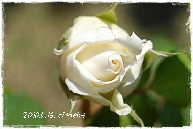 tineke11_20100605030836.jpg