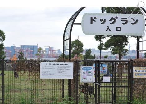 tsubasa_1.jpg