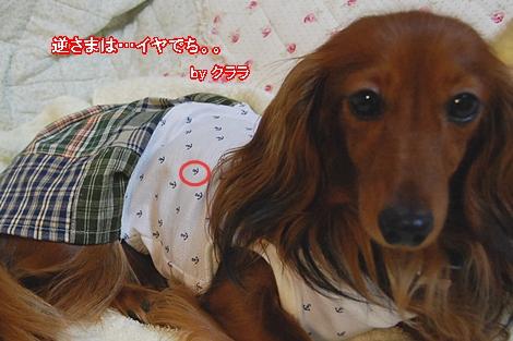 wanfuku201008_16.jpg