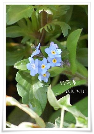wasurena_1.jpg