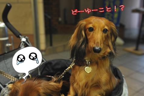 yokohama201010M_40_20101028031450.jpg
