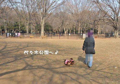 yoyogi_25.jpg