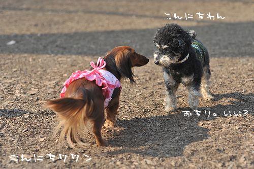 yoyogi_29.jpg