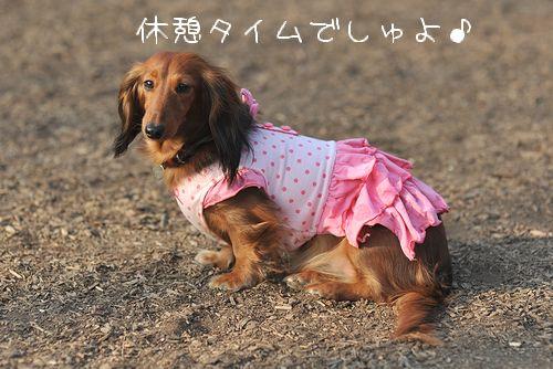 yoyogi_36.jpg