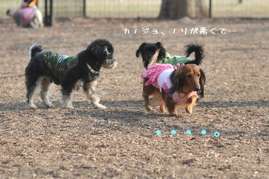 yoyogi_41_20100129011203.jpg