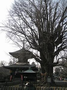 ashikaga-bannaji3.jpg