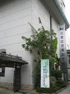 koto-street15.jpg