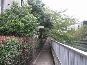 koto-street44.jpg