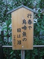 koto-street46.jpg
